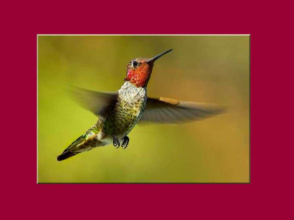 - Laisse - toi faire. Montre - moi tes ailes, ton torse, tes pattes, ton bec, tout.