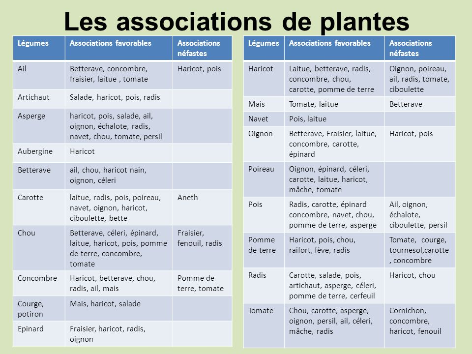 Les associations de plantes LégumesAssociations favorablesAssociations néfastes AilBetterave, concombre, fraisier, laitue, tomate Haricot, pois Artich