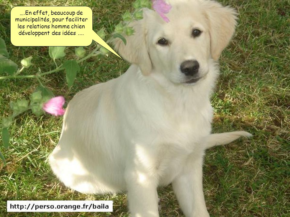 ….En effet, beaucoup de municipalités, pour faciliter les relations homme chien développent des idées....