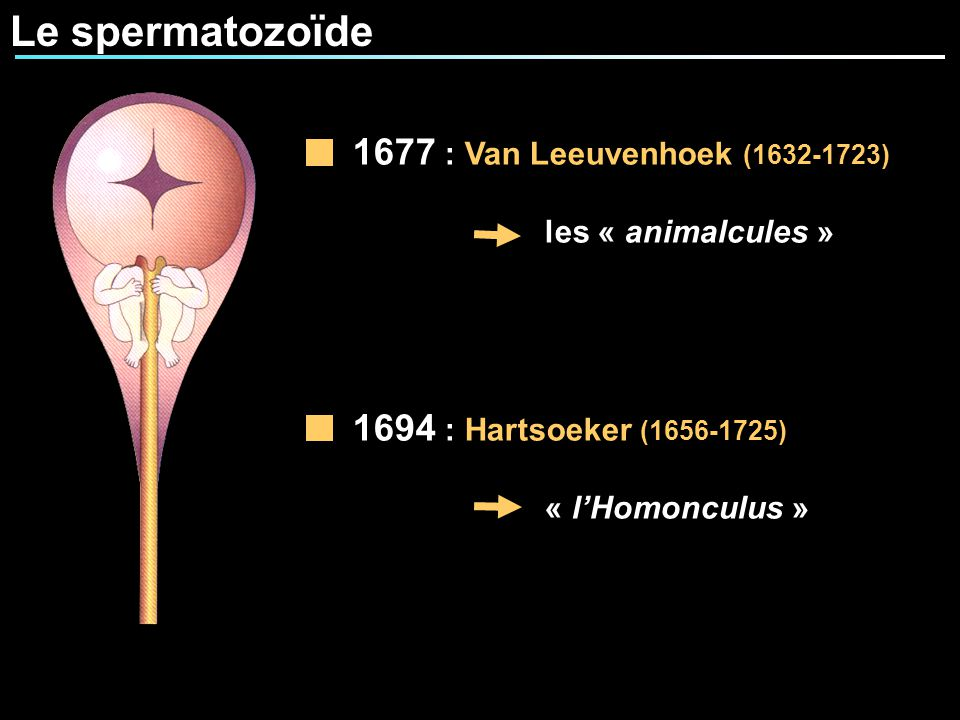 Le spermatozoïde 1677 : Van Leeuvenhoek (1632-1723) les « animalcules » 1694 : Hartsoeker (1656-1725) « lHomonculus »