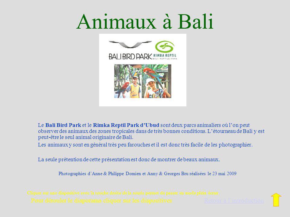Animaux à Bali Le Bali Bird Park et le Rimka Reptil Park dUbud sont deux parcs animaliers où lon peut observer des animaux des zones tropicales dans de très bonnes conditions.