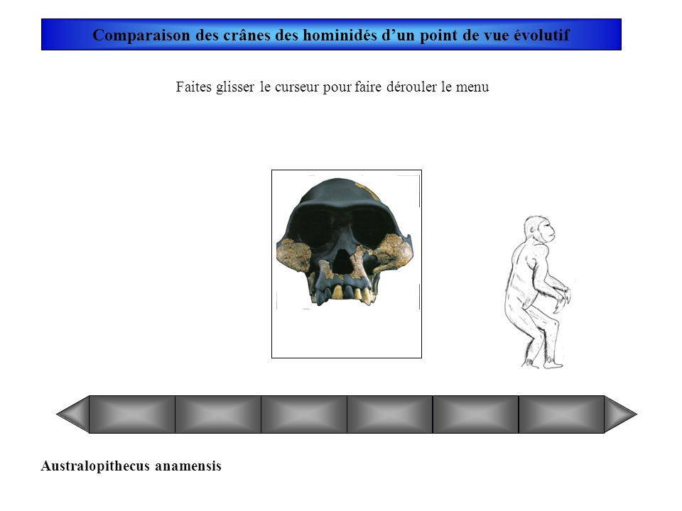 Toumaï Comparaison des crânes des hominidés dun point de vue évolutif Faites glisser le curseur pour faire dérouler le menu