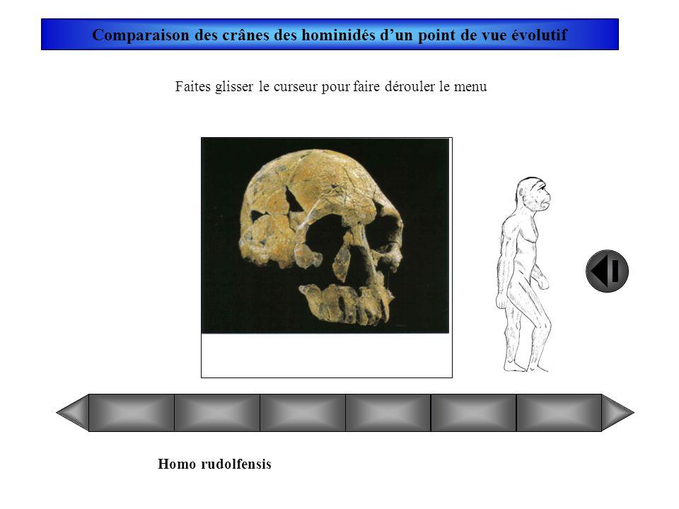 Australopithecus anamensis Faites glisser le curseur pour faire dérouler le menu Comparaison des crânes des hominidés dun point de vue évolutif