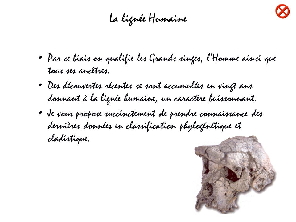 LA LIGNEE HUMAINE HOMINOIDES Hominoidés Cliquer sur les boutons ou sur les images Hylobatidés Pongidés Hominidés Panidés Homininés Le Samburupithèque daté de 8 M.A est le premier primate que lon peut apparenter aux Homininés.