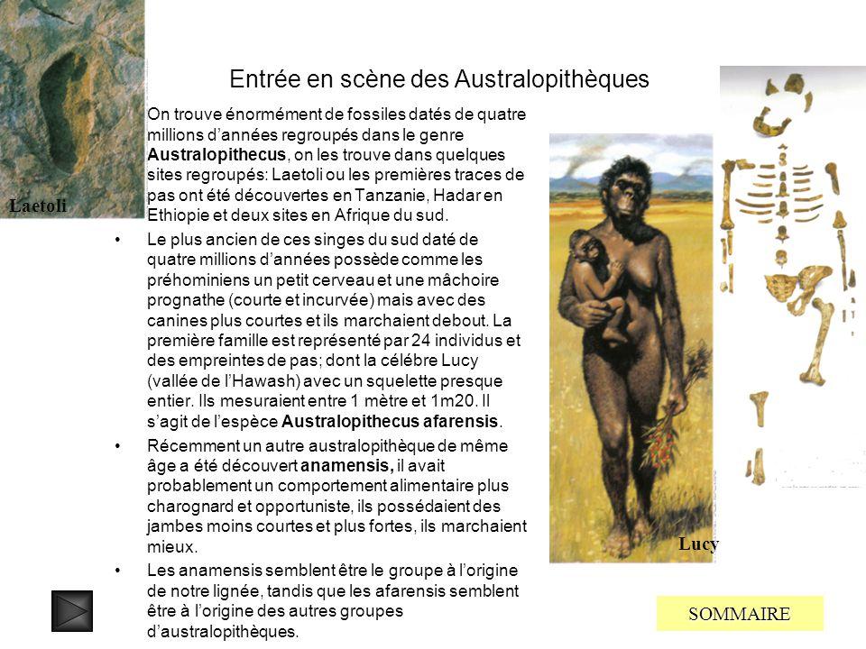 Entrée en scène des Homininés Jusquà ces dernières années on ne trouvait pas de fossiles dHomininés datant de plus de quatre millions dannées, de plus