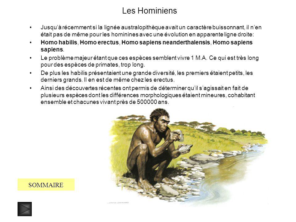 Entrée en scène des Hominines, les derniers australopithèques SOMMAIRE Il y a 3 millions dannées une grande glaciation pousse les hominiens à se dépla