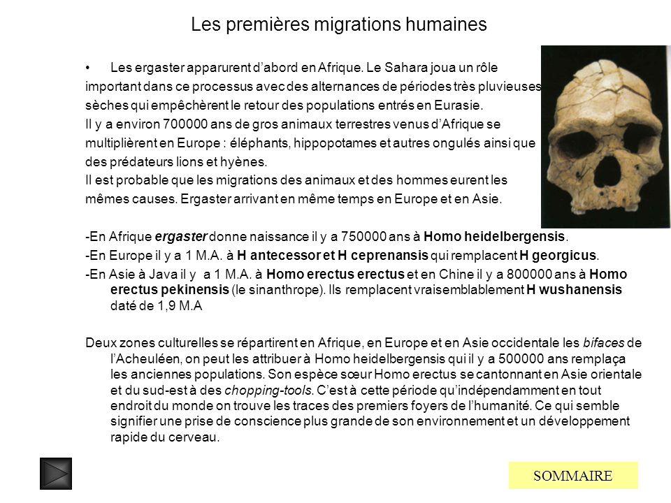 Les premiers hominiens sont les Kenyathropes leur capacité cérébrale est au dessus de celle des australopithèques 600-700 cm3 avec une taille de 1m30