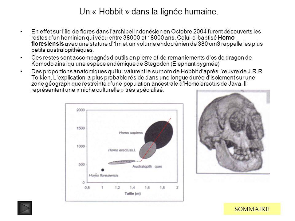 … vers Homo sapiens SOMMAIRE La période allant de 300000 à 40000 ans constitue une importante ère de transition entre Homo heidelbergensis et Homo sap