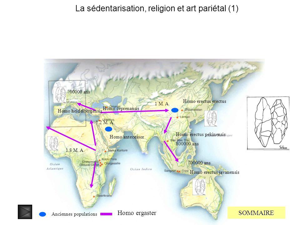 La sédentarisation, religion et art pariétal (1) SOMMAIRE 2,2 M..A. 2 M. A. 1.9 M. A. 1.3 M. A. ? Homo habilis Homo wushanensis Homo georgicus Homo ha