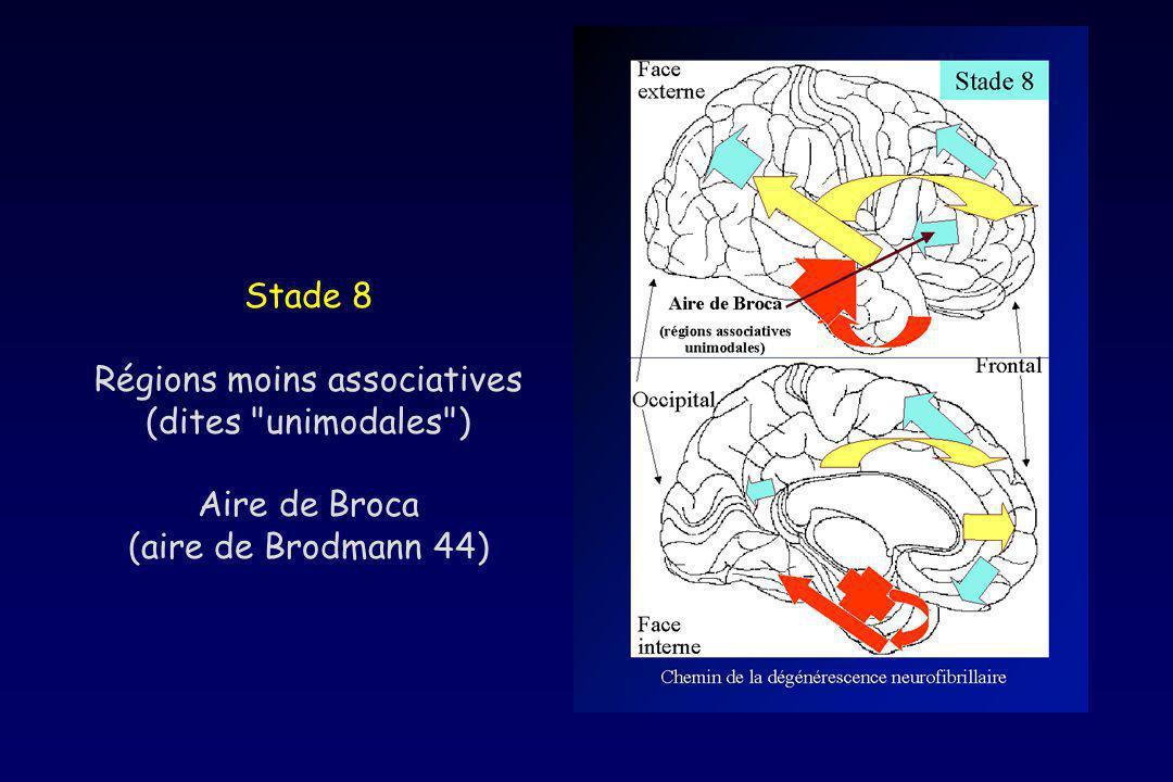 Stade 8 Régions moins associatives (dites unimodales ) Aire de Broca (aire de Brodmann 44)