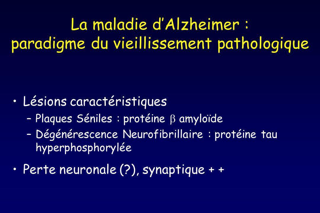 La maladie dAlzheimer : paradigme du vieillissement pathologique Lésions caractéristiques –Plaques Séniles : protéine amyloïde –Dégénérescence Neurofibrillaire : protéine tau hyperphosphorylée Perte neuronale (?), synaptique + +
