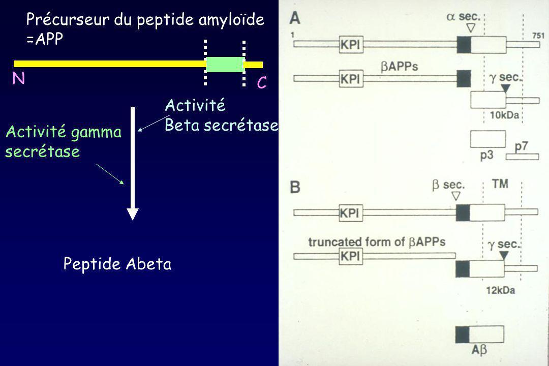 Précurseur du peptide amyloïde =APP Peptide Abeta Activité Beta secrétase Activité gamma secrétase C N