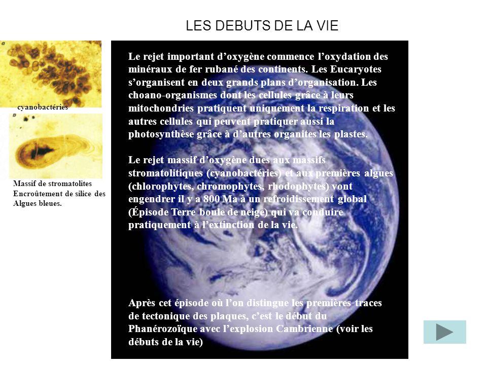 LES DEBUTS DE LA VIE Le rejet important doxygène commence loxydation des minéraux de fer rubané des continents. Les Eucaryotes sorganisent en deux gra