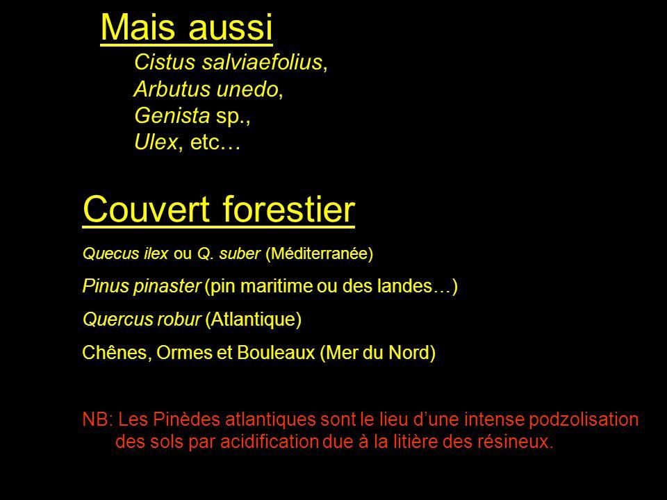 Mais aussi Cistus salviaefolius, Arbutus unedo, Genista sp., Ulex, etc… Couvert forestier Quecus ilex ou Q. suber (Méditerranée) Pinus pinaster (pin m