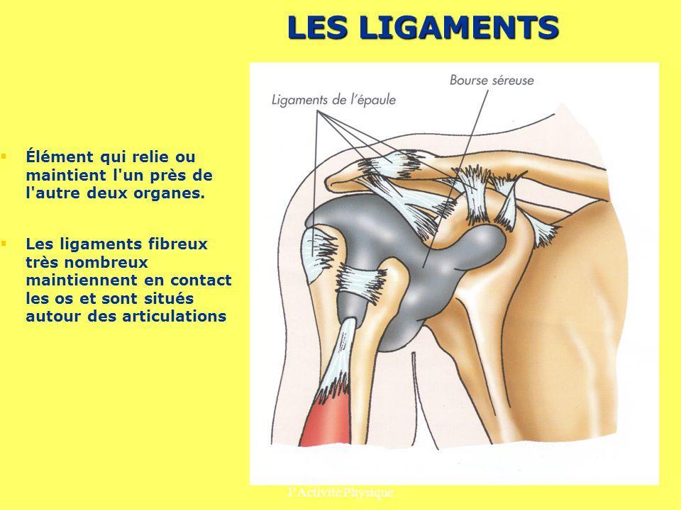 Prévention des Risques liés à lActivité Physique 5 LES LIGAMENTS Élément qui relie ou maintient l'un près de l'autre deux organes. Les ligaments fibre