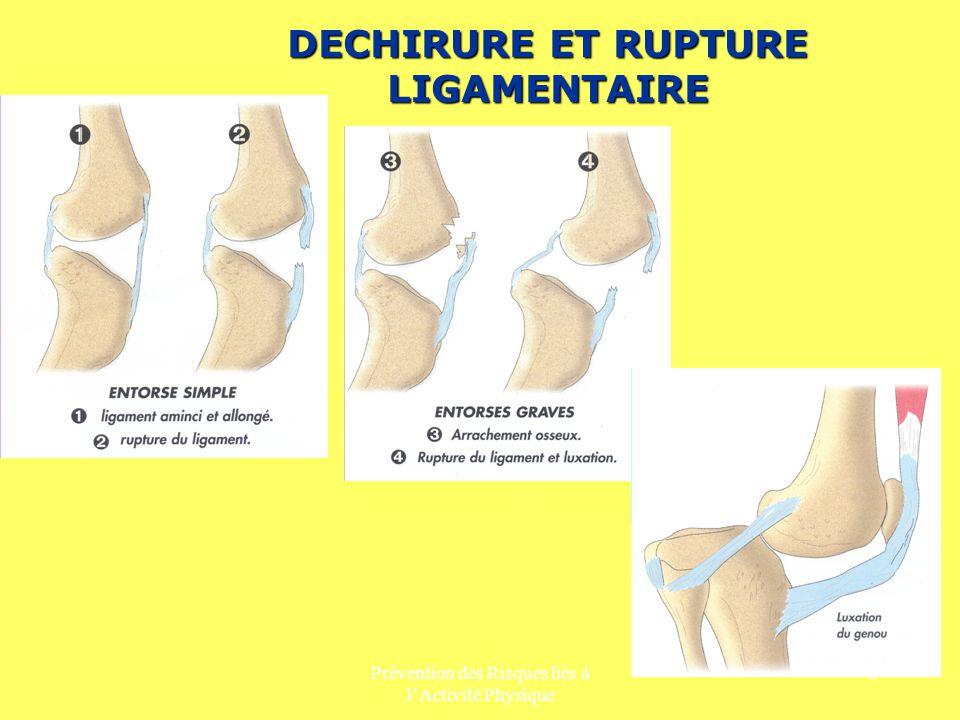 Prévention des Risques liés à lActivité Physique 7 L ACTIVITE MUSCULAIRE ET ARTICULAIRE Le muscle L enveloppe musculaire recouvre notre squelette et détermine en partie la forme de notre corps, lui donne sa mobilité et permet le maintien des postures.