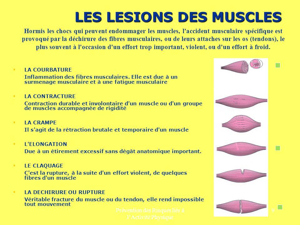 Prévention des Risques liés à lActivité Physique 9 LES LESIONS DES MUSCLES LA COURBATURE Inflammation des fibres musculaires. Elle est due à un surmen