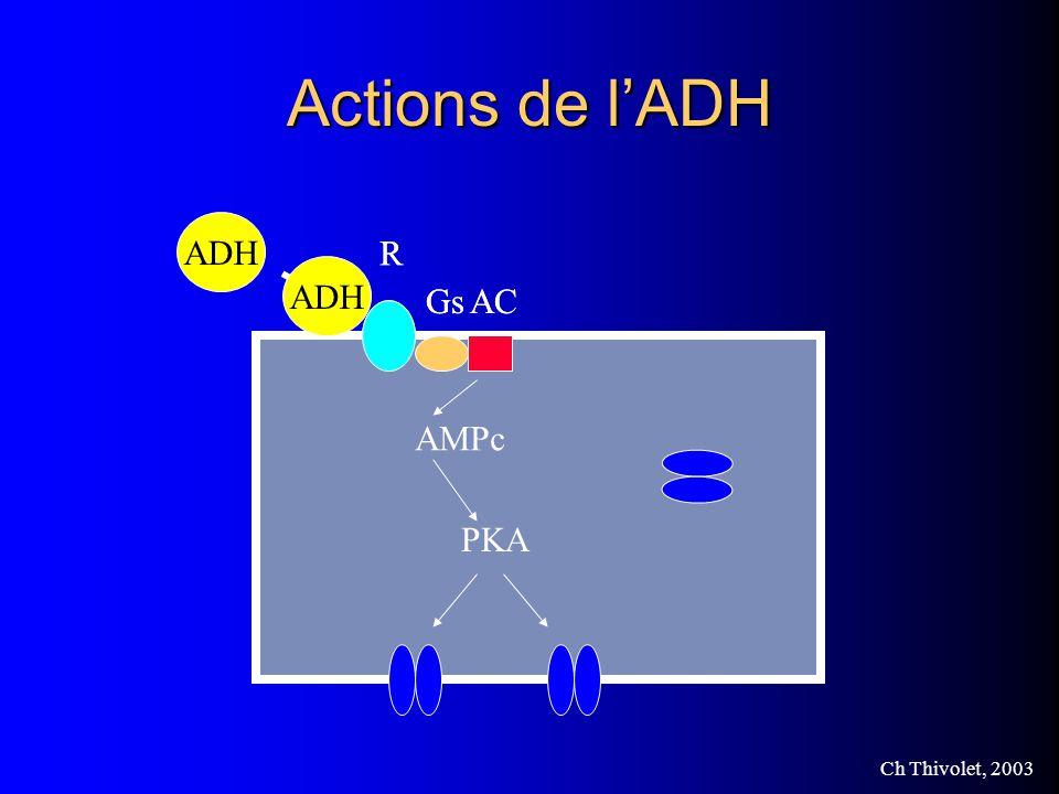 Ch Thivolet, 2003 Actions de lADH Aquaporine ADH R GsAC ADH R GsAC AMPc PKA