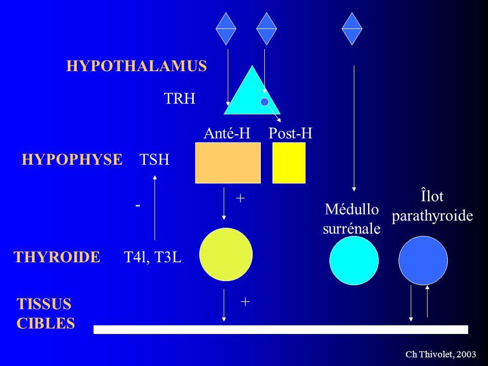 Ch Thivolet, 2003 HYPOTHALAMUS HYPOPHYSE T4l, T3L TSH Anté-HPost-H Médullo surrénale TISSUS CIBLES Îlot parathyroide TRH THYROIDE + + -