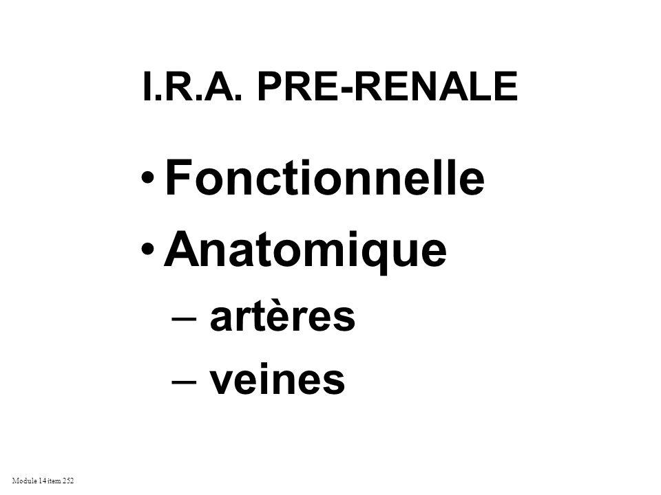 Module 14 item 252 I.R.A. PRE-RENALE Fonctionnelle Anatomique – artères – veines