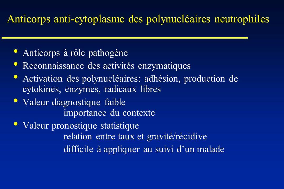 Anticorps anti-cytoplasme des polynucléaires neutrophiles Anticorps à rôle pathogène Reconnaissance des activités enzymatiques Activation des polynucl