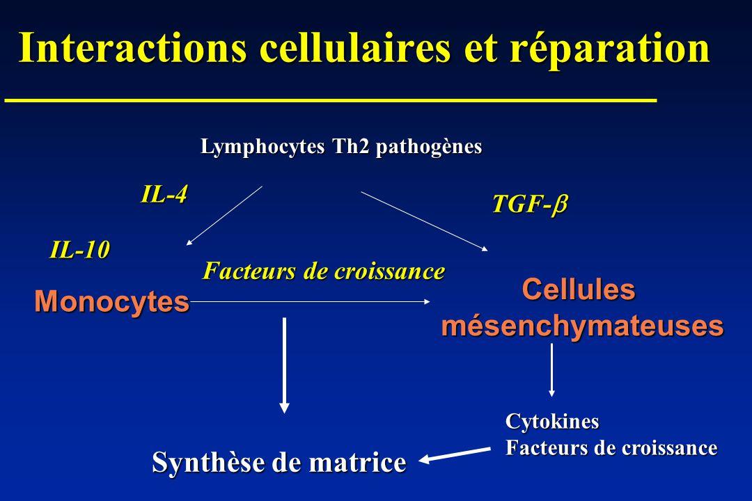 Interactions cellulaires et réparation Monocytes Cellulesmésenchymateuses Lymphocytes Th2 pathogènes IL-10 IL-4 TGF- TGF- Synthèse de matrice Cytokine