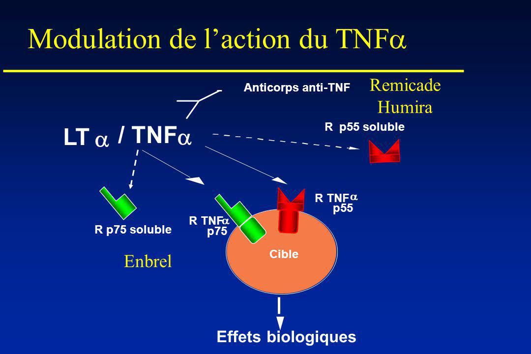 Modulation de laction du TNF Effets biologiques / TNF R TNF p55 Cible Anticorps anti-TNF R p55 soluble R p75 soluble R TNF p75 Remicade Humira Enbrel LT