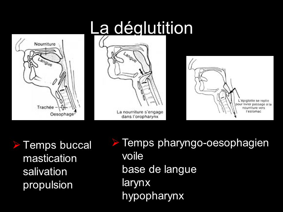 La déglutition Temps pharyngo-oesophagien voile base de langue larynx hypopharynx Temps buccal mastication salivation propulsion