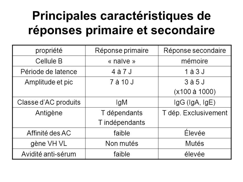 Principales caractéristiques de réponses primaire et secondaire propriétéRéponse primaireRéponse secondaire Cellule B« naïve »mémoire Période de laten
