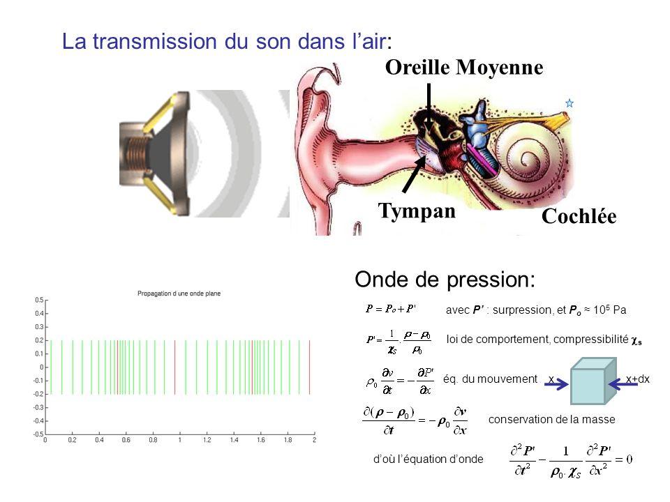 Cochlée Tympan Oreille Moyenne La transmission du son dans lair: Onde de pression: avec P : surpression, et P o 10 5 Pa loi de comportement, compressibilité s éq.