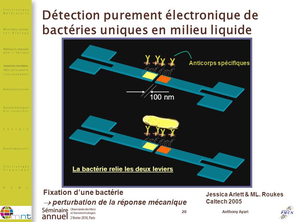20Anthony Ayari Anticorps spécifiques La bactérie relie les deux leviers 100 nm Fixation dune bactérie perturbation de la réponse mécanique Jessica Ar