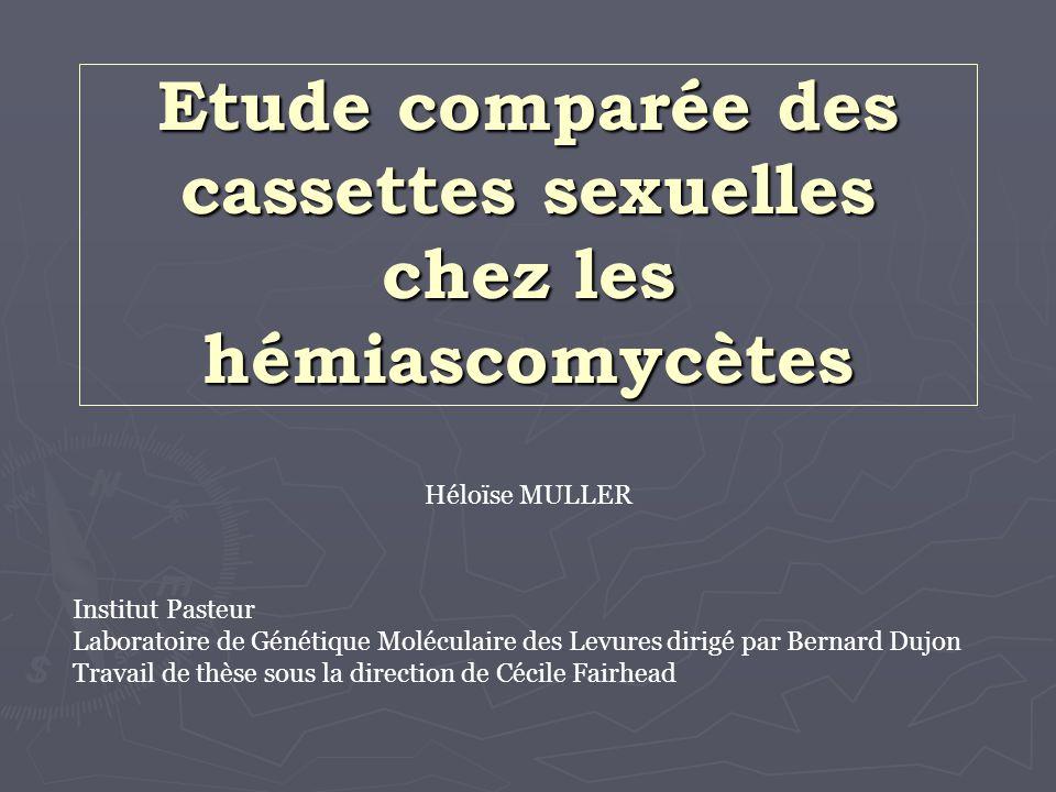 Etude comparée des cassettes sexuelles chez les hémiascomycètes Héloïse MULLER Institut Pasteur Laboratoire de Génétique Moléculaire des Levures dirig