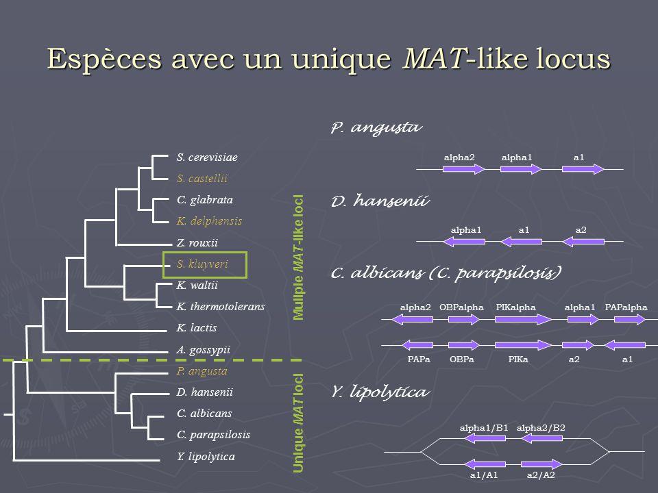 - 2 types dorganisation des MAT-, HMR- et HML- like loci - inversion possible des cassettes - diversité de taille et de présence des cassettes entre les espèces - S.