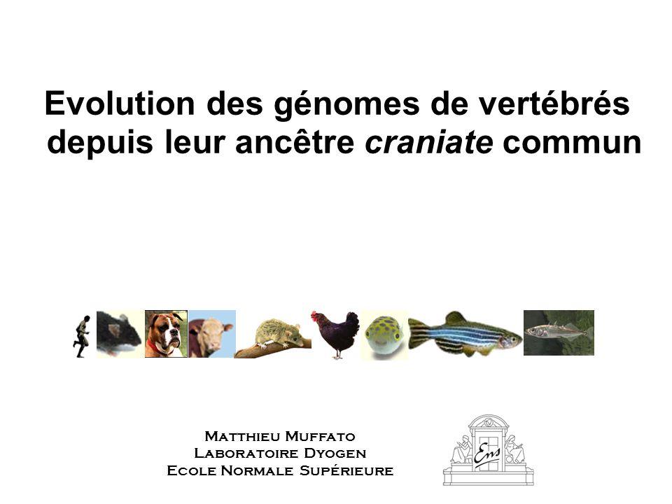 Evolution des génomes de vertébrés depuis leur ancêtre craniate commun Matthieu Muffato Laboratoire Dyogen Ecole Normale Supérieure
