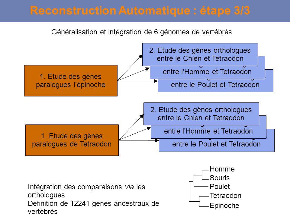 1. Etude des gènes paralogues de Tetraodon 2. Etude des gènes orthologues entre le Poulet et Tetraodon 2. Etude des gènes orthologues entre lHomme et