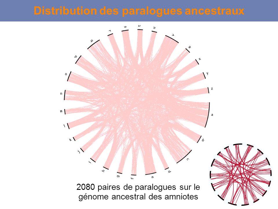 Distribution des paralogues ancestraux 2080 paires de paralogues sur le génome ancestral des amniotes