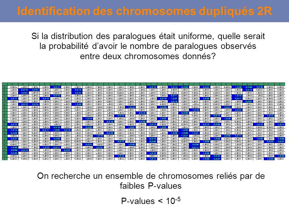 Si la distribution des paralogues était uniforme, quelle serait la probabilité davoir le nombre de paralogues observés entre deux chromosomes donnés?