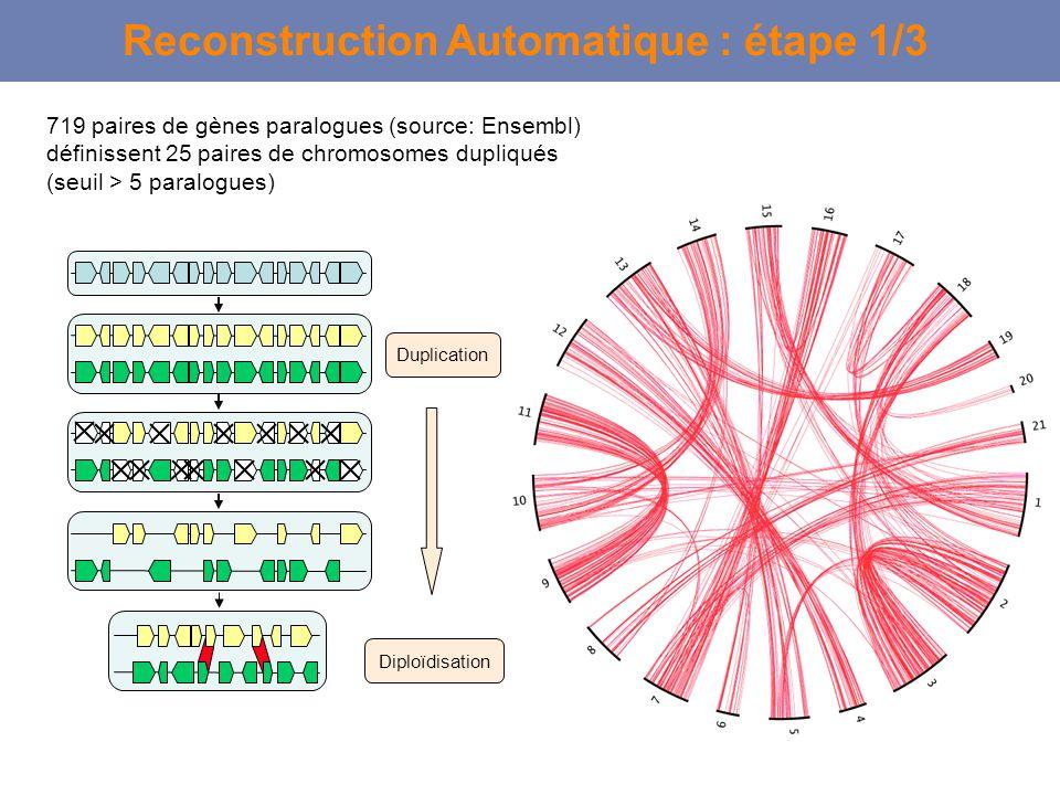 Duplication Diploïdisation Reconstruction Automatique : étape 1/3 719 paires de gènes paralogues (source: Ensembl) définissent 25 paires de chromosome