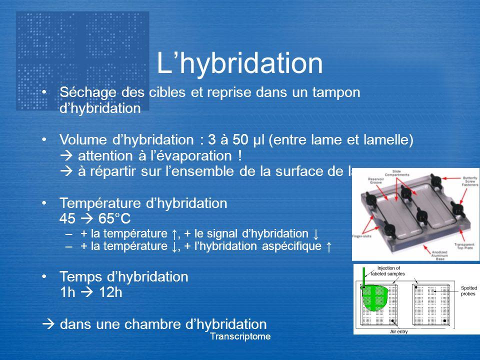 Transcriptome Lhybridation Séchage des cibles et reprise dans un tampon dhybridation Volume dhybridation : 3 à 50 μl (entre lame et lamelle) attention