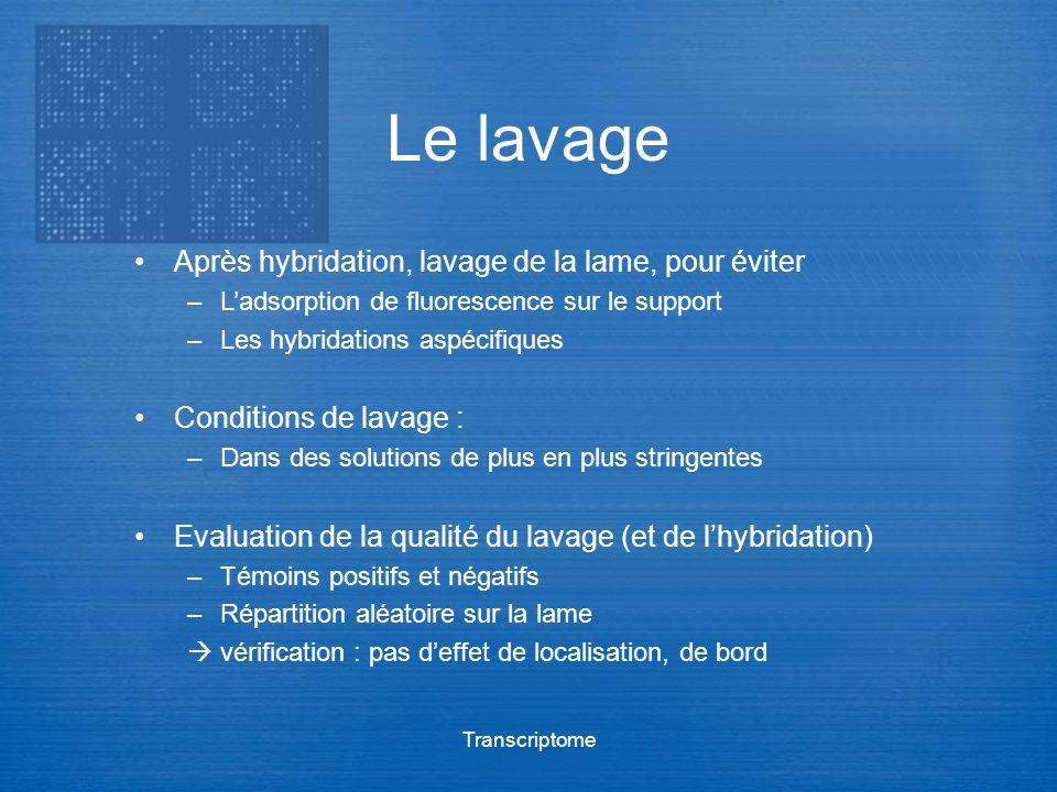 Transcriptome Le lavage Après hybridation, lavage de la lame, pour éviter –Ladsorption de fluorescence sur le support –Les hybridations aspécifiques C