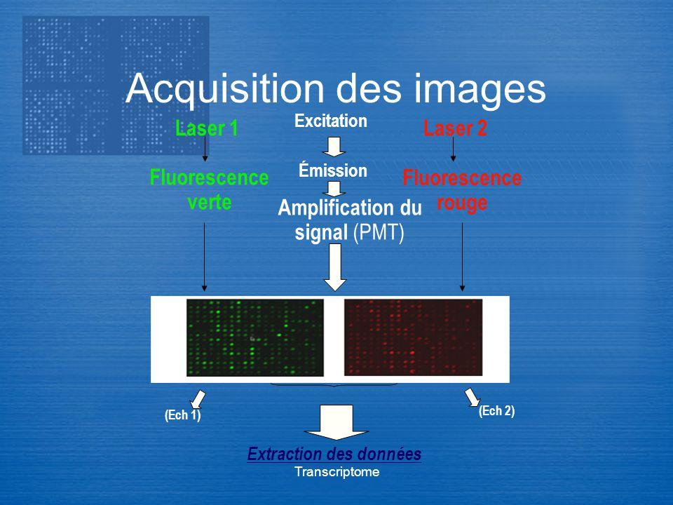 Transcriptome Acquisition des images Extraction des données Excitation Amplification du signal (PMT) Émission Laser 1Laser 2 Fluorescence verte Fluore