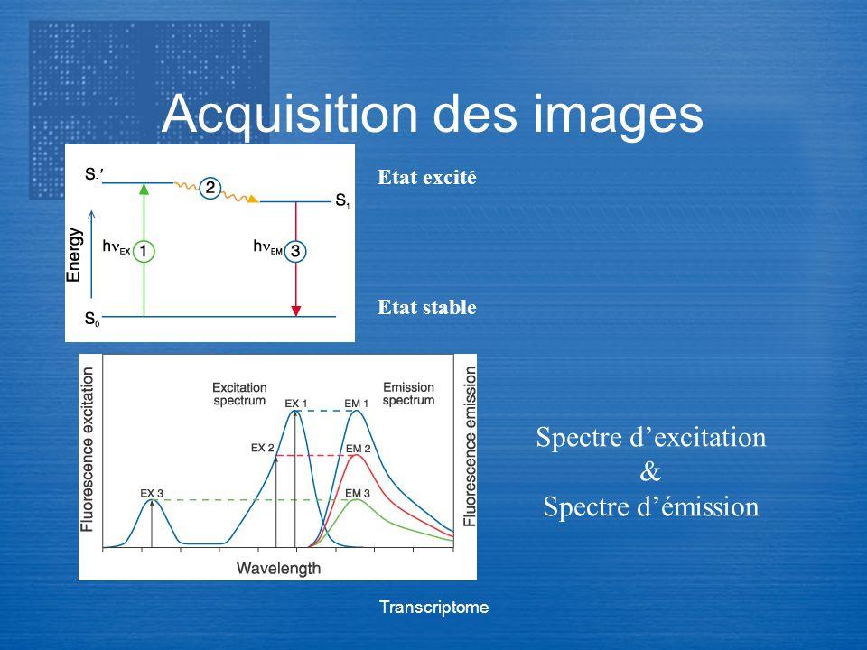 Transcriptome Acquisition des images Etat excité Etat stable Spectre dexcitation & Spectre démission