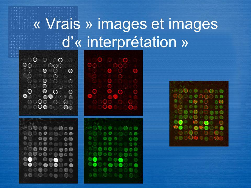 Transcriptome « Vrais » images et images d« interprétation »