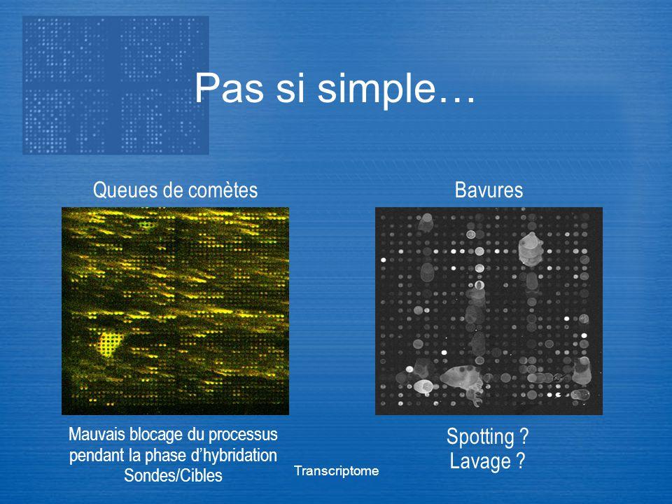 Transcriptome Pas si simple… Queues de comètesBavures Mauvais blocage du processus pendant la phase dhybridation Sondes/Cibles Spotting ? Lavage ?