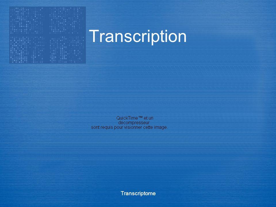 Transcriptome Transcription