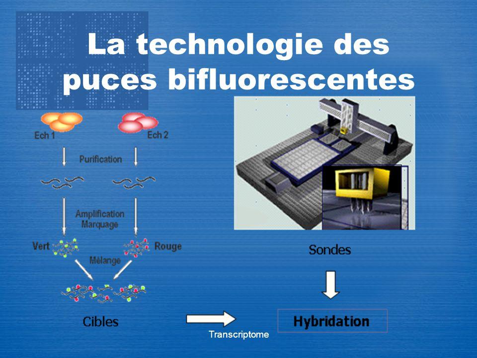 Transcriptome La technologie des puces bifluorescentes