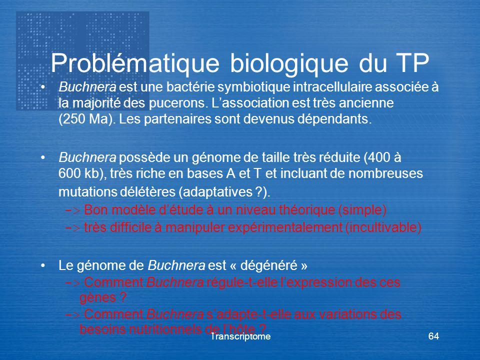 Transcriptome64 Problématique biologique du TP Buchnera est une bactérie symbiotique intracellulaire associée à la majorité des pucerons. Lassociation