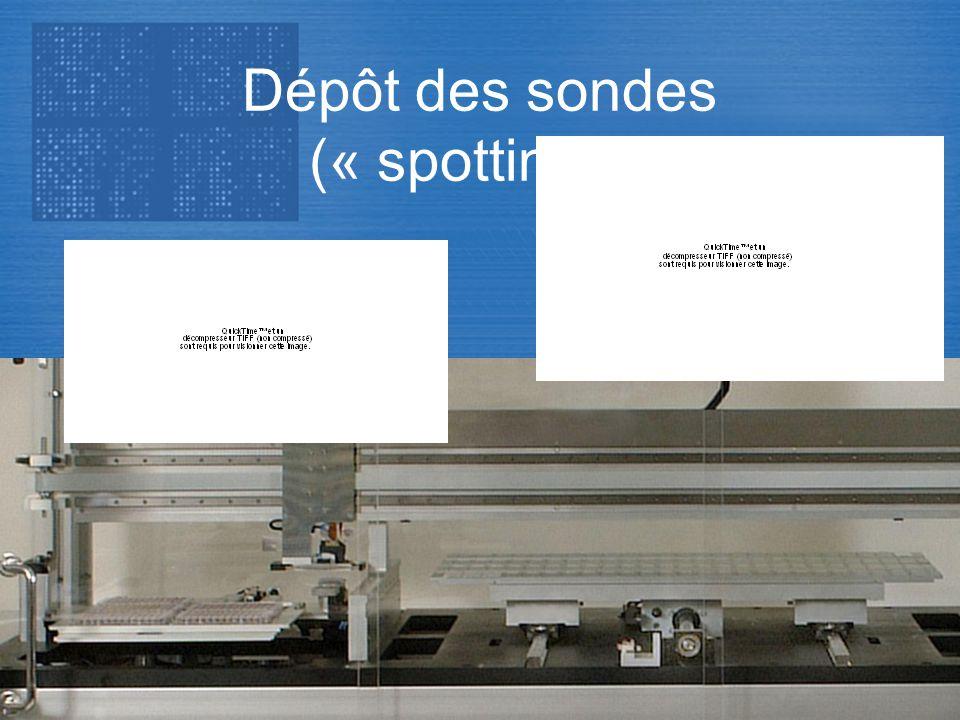 Transcriptome Dépôt des sondes (« spotting »)