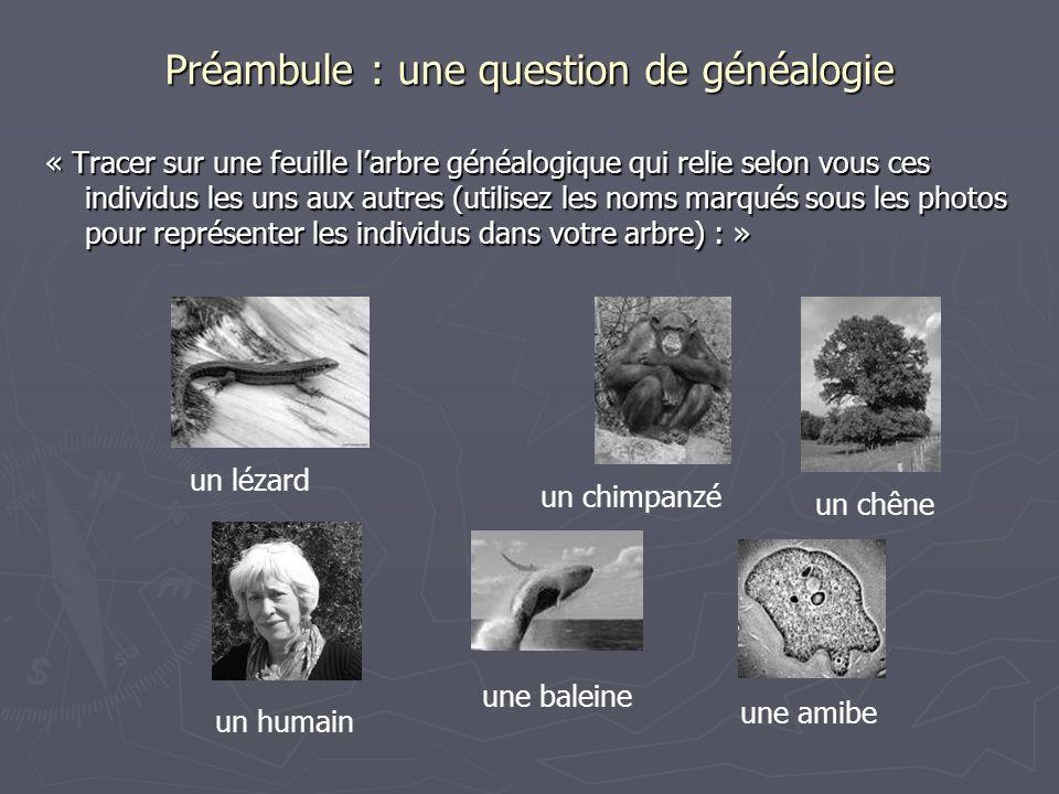 Préambule : une question de généalogie « Tracer sur une feuille larbre généalogique qui relie selon vous ces individus les uns aux autres (utilisez le