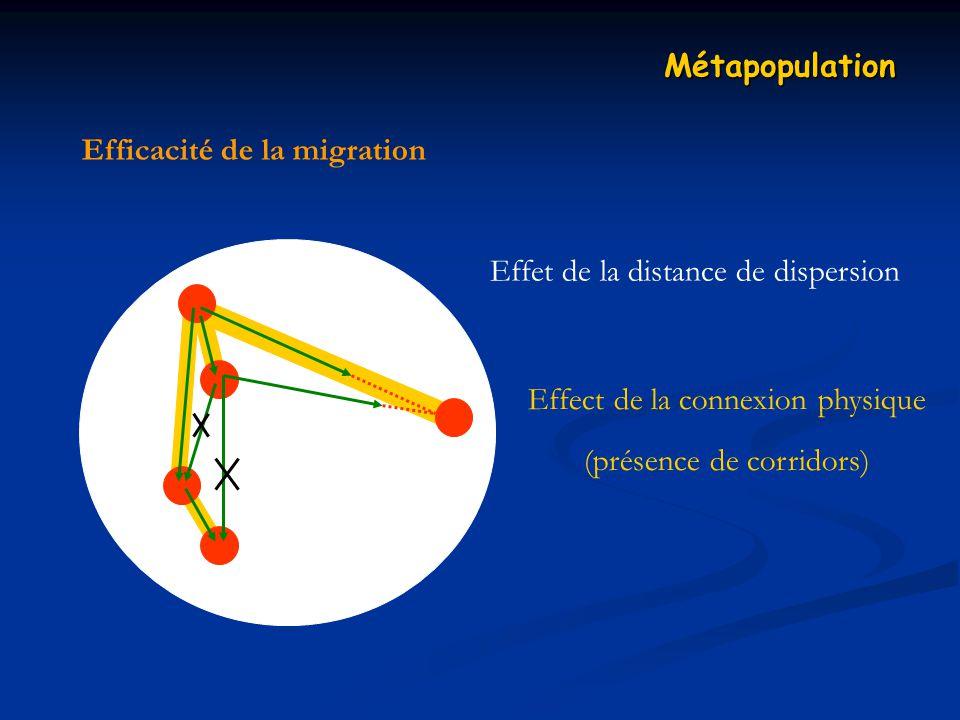 Efficacité de la migration Métapopulation Effect de la connexion physique (présence de corridors) Effet de la distance de dispersion